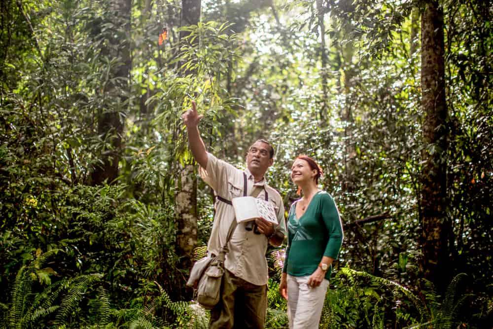 Langkawi regnskov fugle og dyr