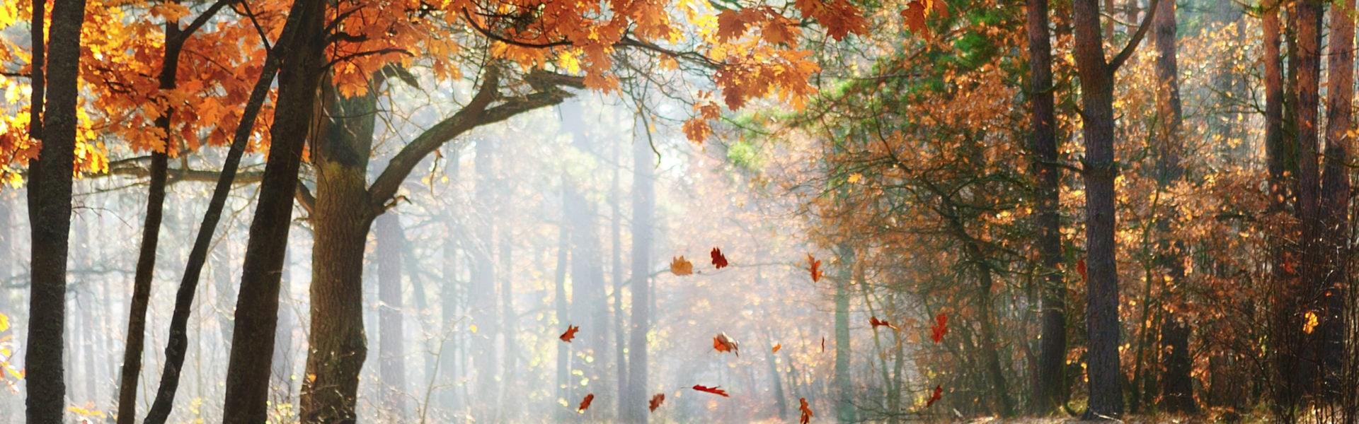 Efterårsferien